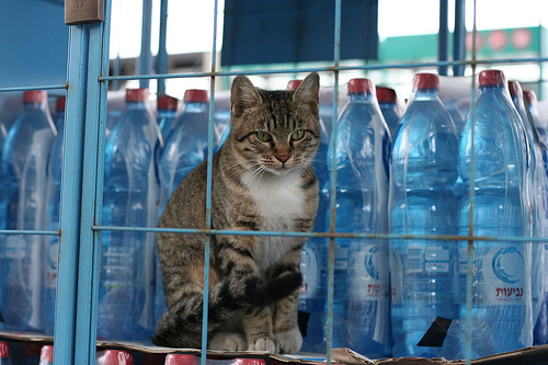Cats aren't afraid of bottled water
