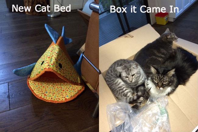 New Cat Bed